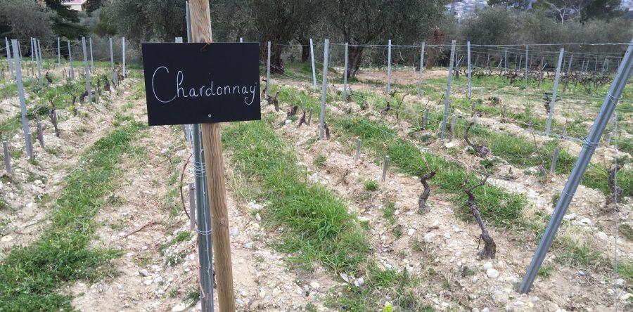 Château de Bellet, organic winemaking in Bellet, near Nice - Sustainable  Wine