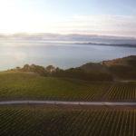 Yealands-vineyard-pic-3-wide-coast-shot